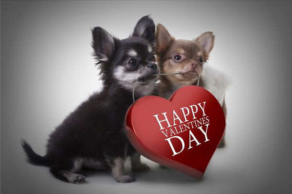 cute dog valentines day cards