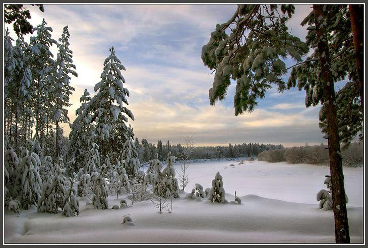 Зимний вечер в лесу, на берегу реки ...: pinterest.com/pin/550987335631014731