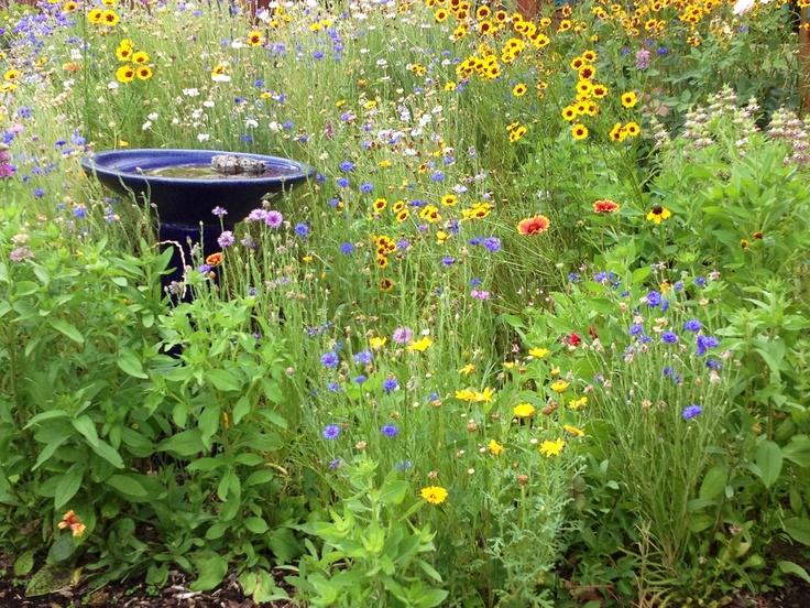 My backyard wild flower garden garden ideas pinterest for Wildflower garden designs