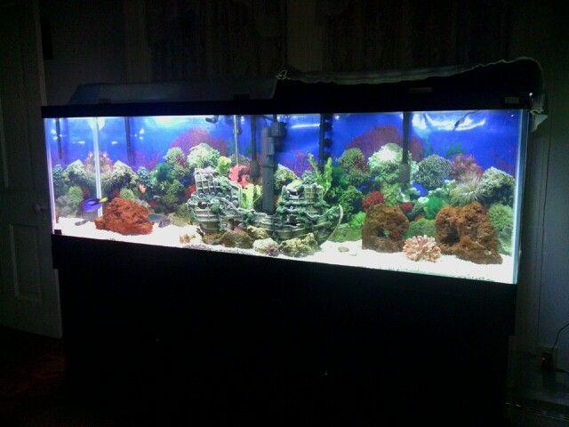 125 gallon saltwater fish aquarium at home... i must say im kind of a ...