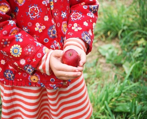 Picking apples for a free-form apple tart | Recipe