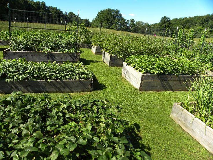 Raised beds with grass paths | Garden | Pinterest