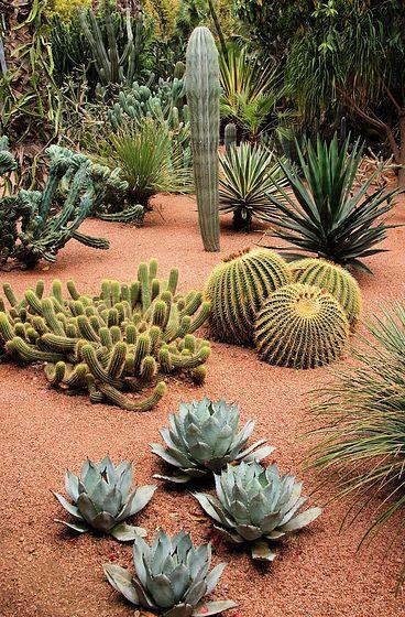 Desert Cactus Garden Gorgeous Gardens Pinterest