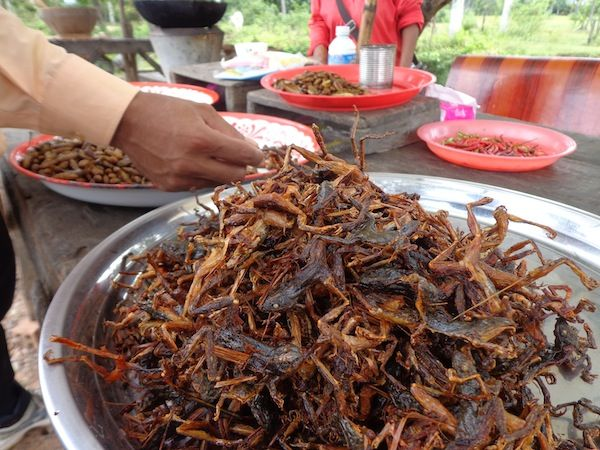 Whole Fried Frogs