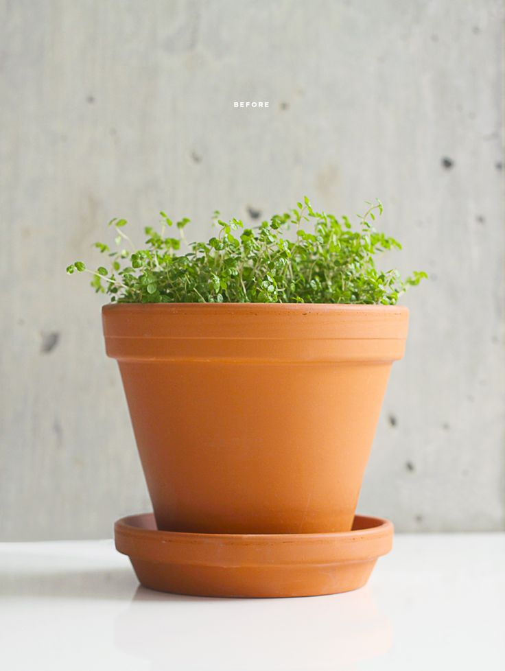 diy terracotta plant pots garden patio pinterest