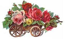 rose wheelbarrow