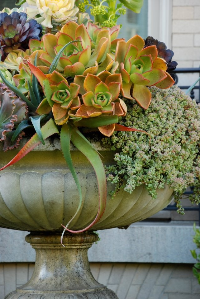 Succulents en masse in urn