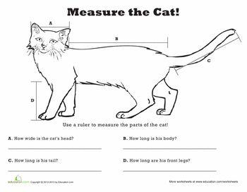 Worksheet Linear Measurement In Addition Vocabulary Hunt Worksheet ...