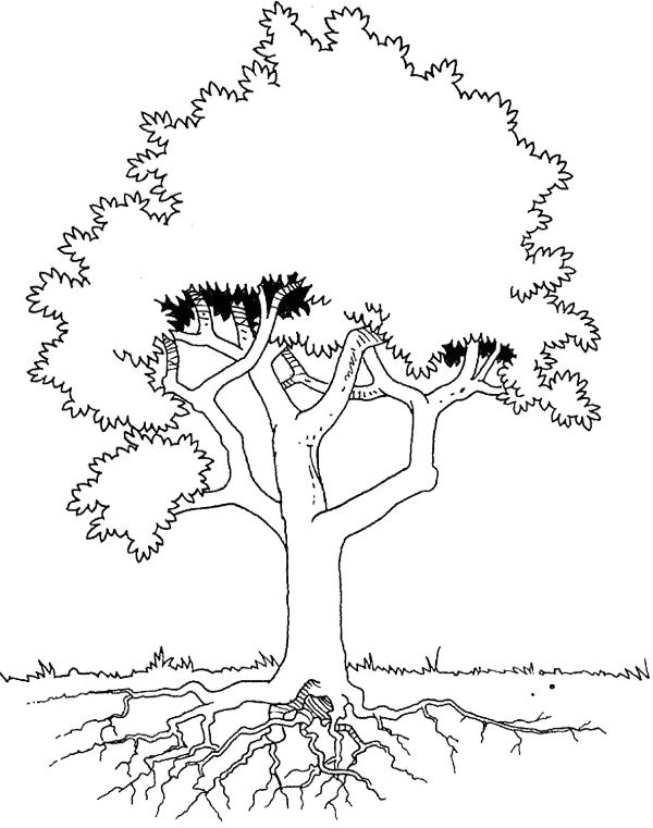 How To Draw Tree And Root