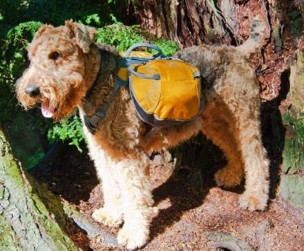 REI Ultra Dog Pack - Medium    Item # 803424
