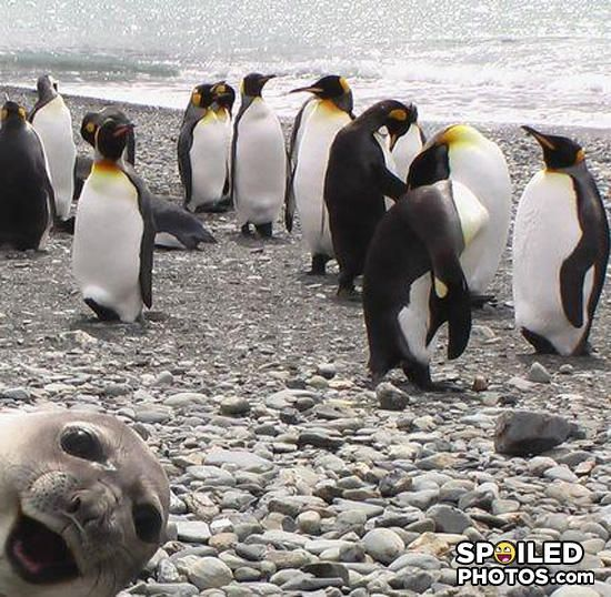 Best photo bomb... EVER! lol