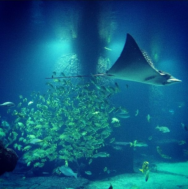 The Dig Atlantis Resort Nassau Paradise Island