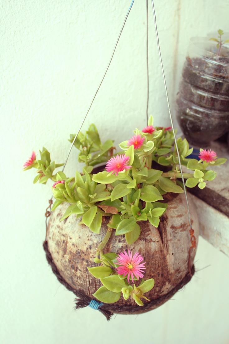 Hanging flower in coconut shell using wire and husk coconut rope