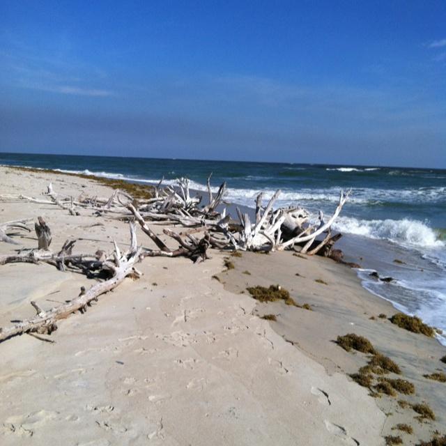 Driftwood Myrtle Beach Sc