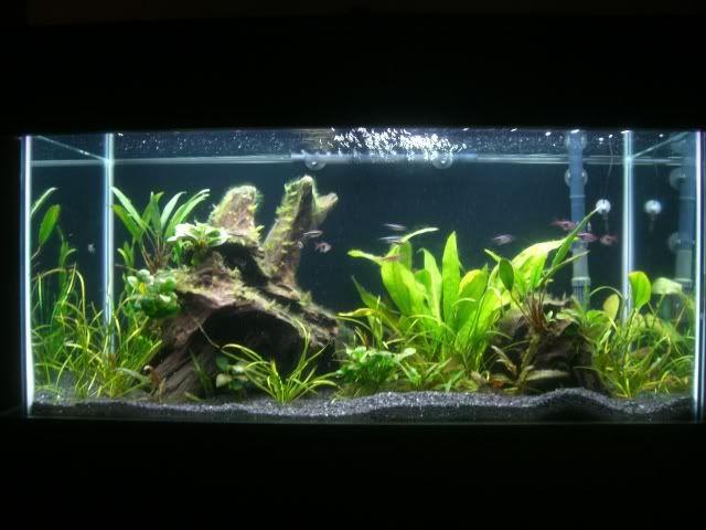 fish tank design home pinterest
