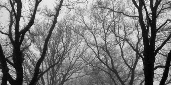 #black #white #grey #trees #branches #twitter #tumblr # ...