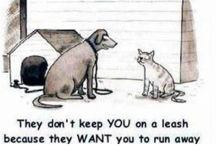 why do we leash up our dog?