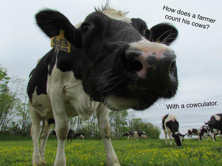 Dairy Farm  Cow  JokeDairy Cow Farm