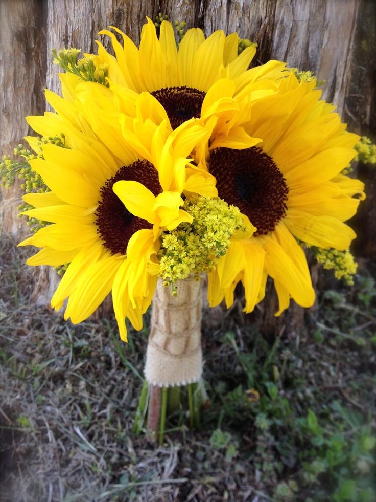 sunflower fresno