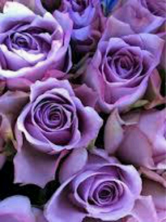 purple roses yes! | Color | Pinterest