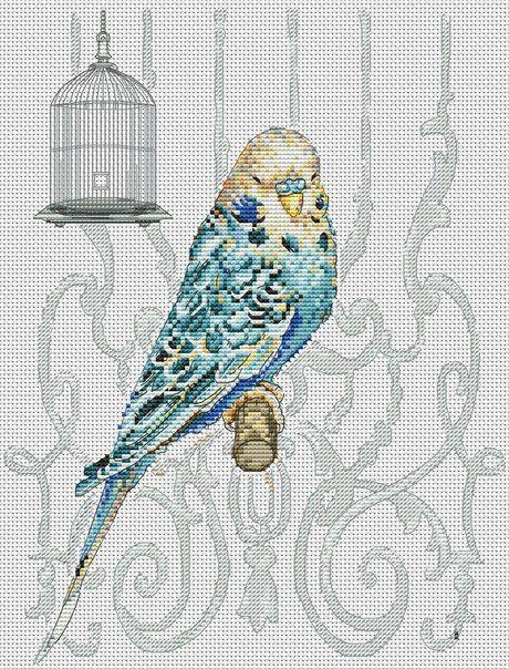 Вышивка крестом волнистые попугайчики 35