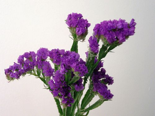 Purple statice flower centerpieces pinterest