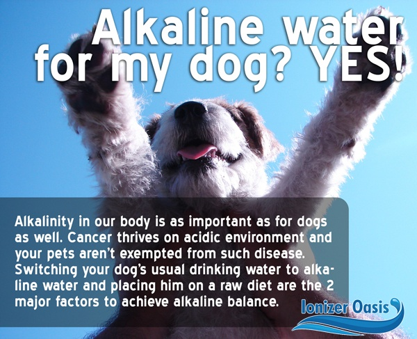 Alkaline water is good for your dog (Visit www.ionizeroasis.com for ...