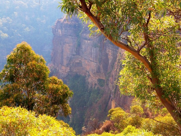 Photo and caption by mary nolan    Depth of a photo    Location: Blue Mountains, Australia