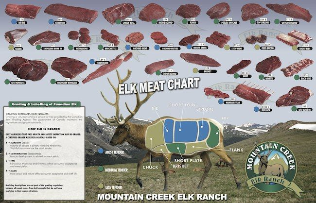 Pin Elk Meat Cutting Chart on Pinterest