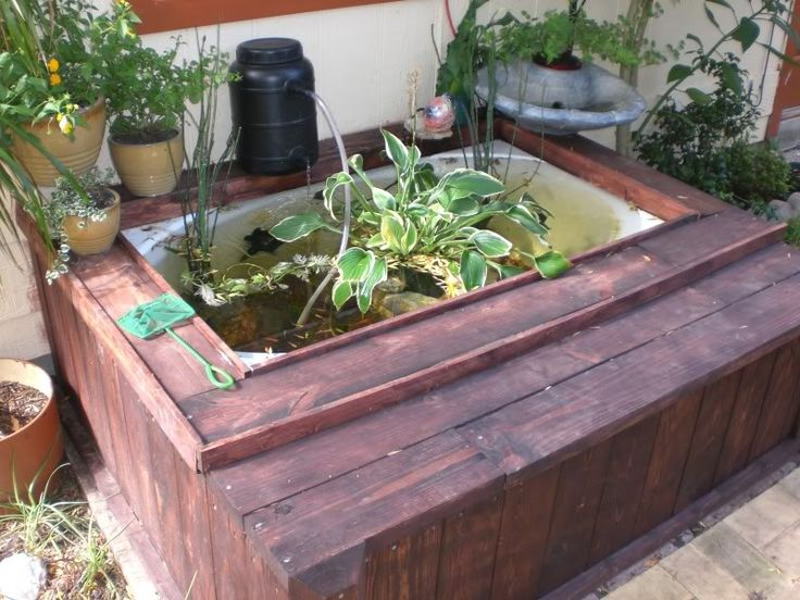 Bathtub fish pond 28 images water gardening bathtub for Bathtub fish pond