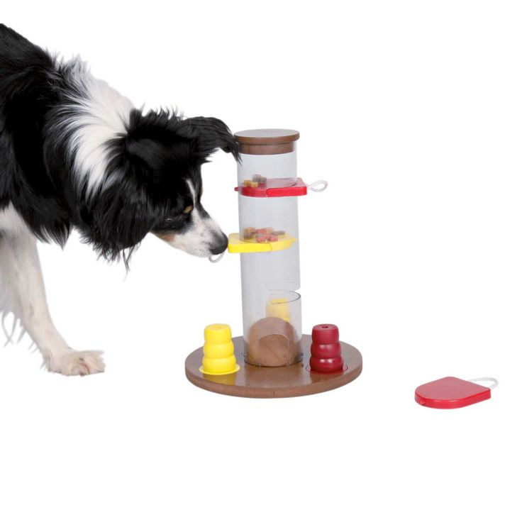 gambling tower dog activity toy