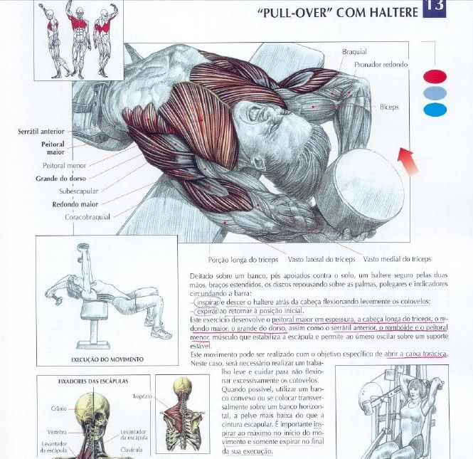 SHOULDERS - LOW PULLEY ROW TO NECK fitness Pinterest Pulley - ups signature release form