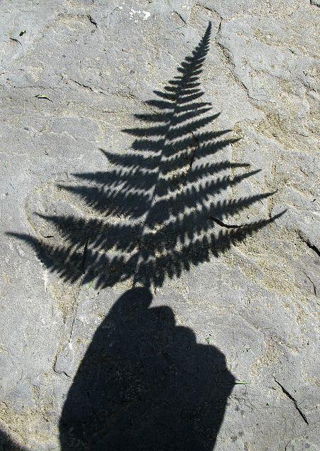fotografare le ombre
