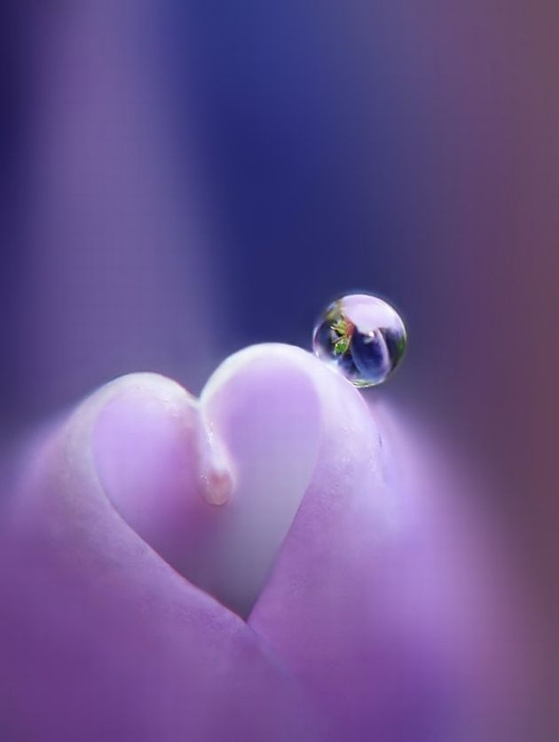 Hearts in Nature: beautiful photo #photography