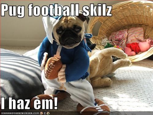 funny pugs archives   page 16 of 18   pug meme funny cute pugs
