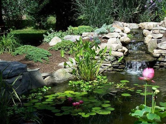 How To Empty Backyard Pond : water garden streamsStream Which Falls Into A Small Clear Pond
