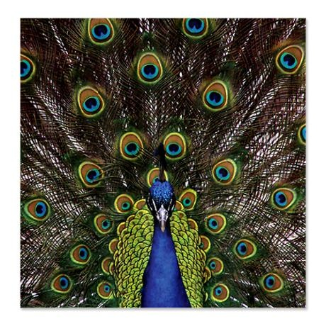 peacock shower curtain on