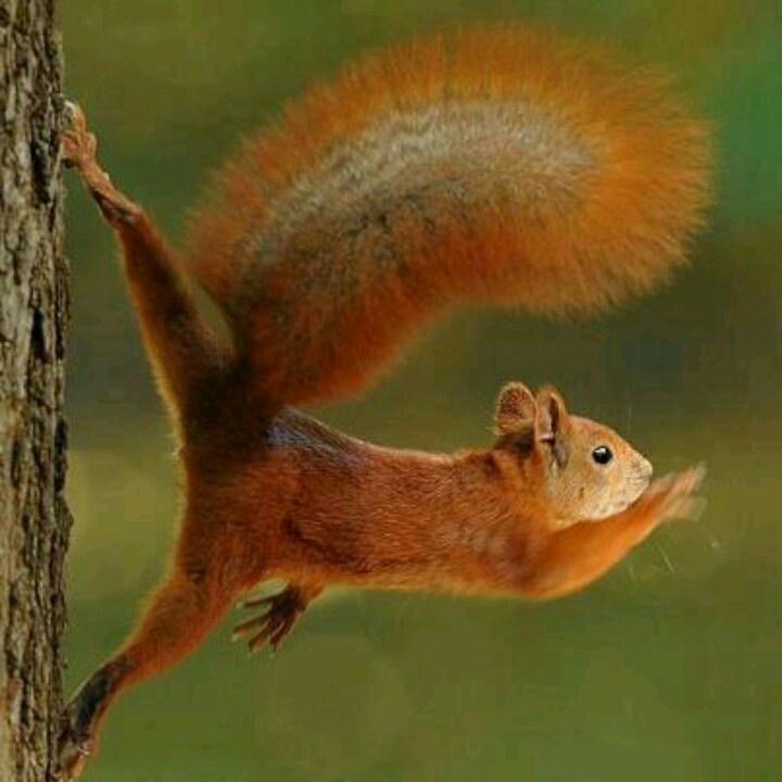 Dancing Squirrel Playing Naturally Pinterest