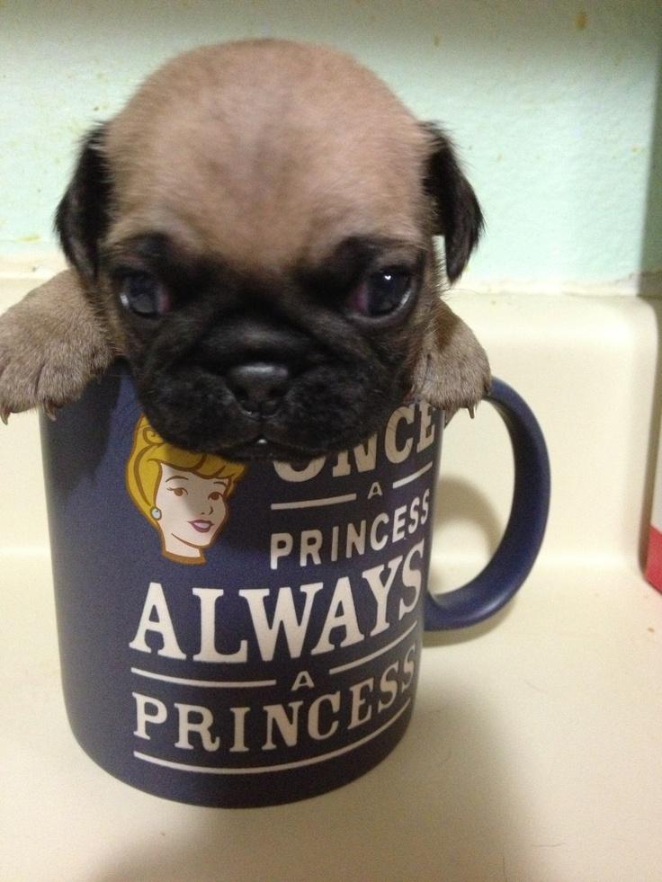 another pug in a mug ideas pinterest