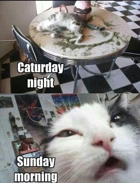 Caturday night sunday morning funny cats pinterest