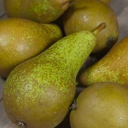 frangipane tart fresh plum frangipane tart rhubarb tartelettes fig