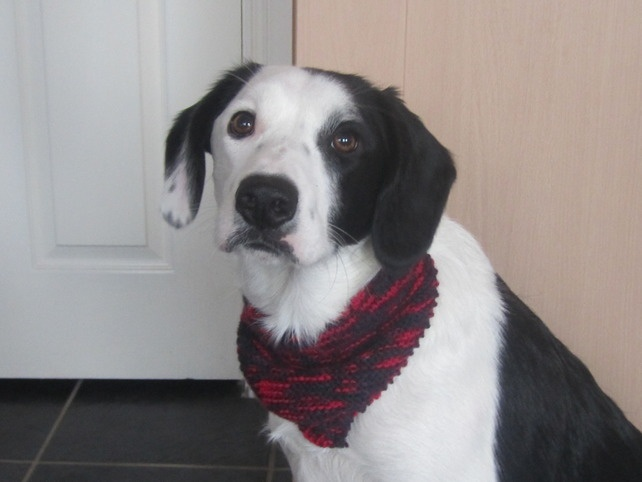 Knitting Pattern For A Dog Scarf : Knitted Dog bandana. Dog scarf