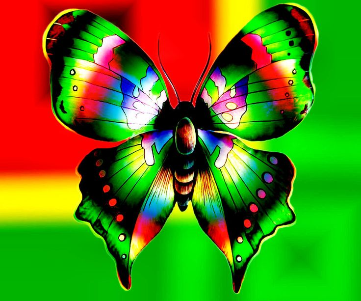 download wallpaper multicolored butterflies - photo #8