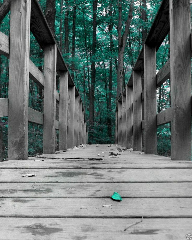 Black white teal forest bridge wall art home decor picture for Art sites like etsy