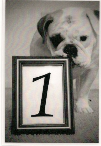 Take a picture of your dog with a frame, then add the different table numbers in to display on each table
