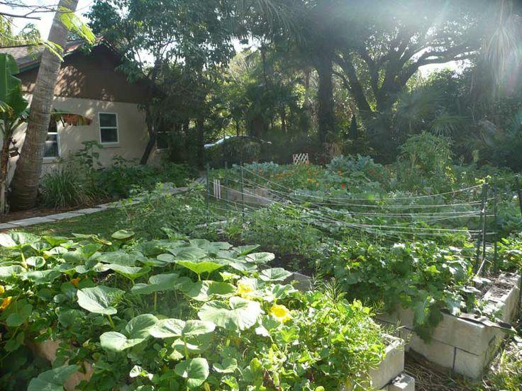 Central Landscape And Garden Drury : Central florida landscaping ideas photos