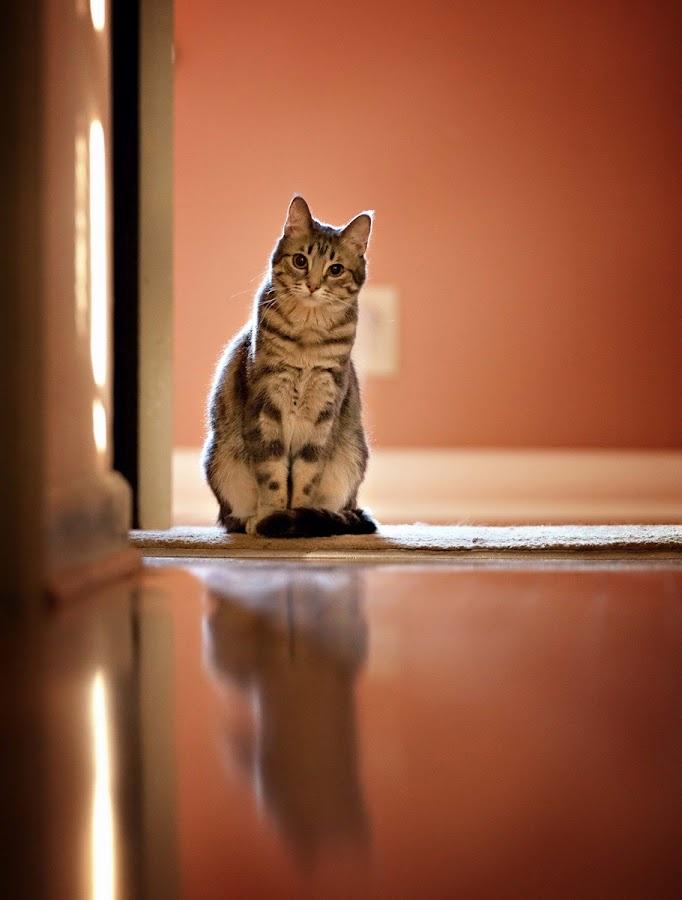 meow..?
