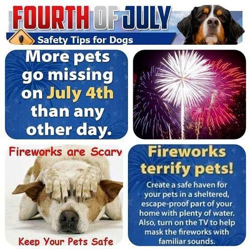4th of july dog meme