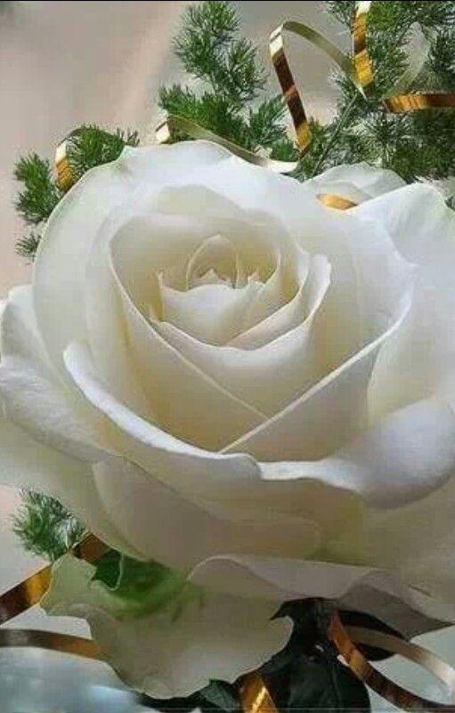 Pornostar rose photos for facebook