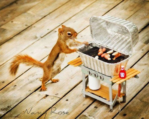 un-ecureuil-super-mignon-photographie-dans-des-positions-adorablement-humaines6